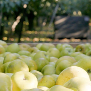 Meet John Zivanovich: One of Our Local Apple Growers